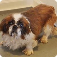 Adopt A Pet :: Koda - Prole, IA
