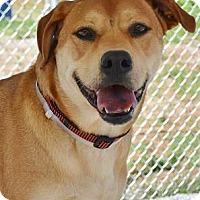 Adopt A Pet :: Zoey - Athens, GA