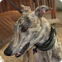 Adopt A Pet :: Cody - Tucson, AZ