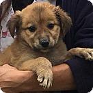 Adopt A Pet :: Kora (7 lb) Video!
