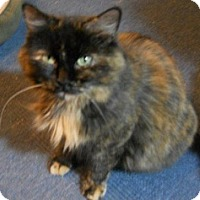 Adopt A Pet :: Gerlinda - Hamburg, NY
