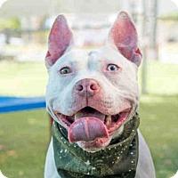 Adopt A Pet :: *FROSTY - Orlando, FL