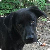 Adopt A Pet :: Jodi - Washington, DC