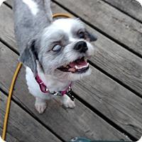 Adopt A Pet :: Frankie - Detroit, MI