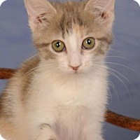 Adopt A Pet :: Sweet Pea - mishawaka, IN