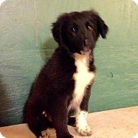 Adopt A Pet :: Garfunkle - Centralia, IL