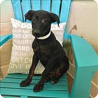 Adopt A Pet :: Mary - Riverside, CA