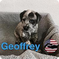 Adopt A Pet :: Geoffrey - Westminster, CO