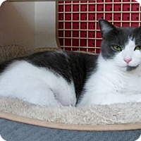 Adopt A Pet :: Chrissy - Richmond, VA