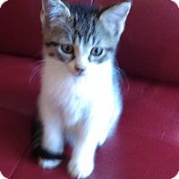 Adopt A Pet :: Luke - Garland, TX