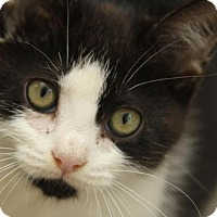 Adopt A Pet :: Glitter - Greensboro, GA