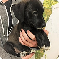 Adopt A Pet :: Skye - Tempe, AZ