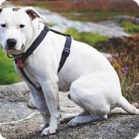 Adopt A Pet :: Niko - Rathdrum, ID