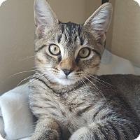 Adopt A Pet :: Vixey - Brandon, FL