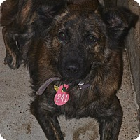 Adopt A Pet :: Heidi - Beaumont, TX