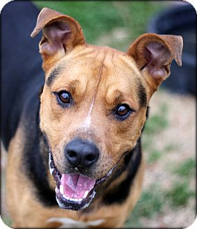 Shepherd (Unknown Type) Mix Dog for adoption in Fort Worth, Texas - Flash URGENT