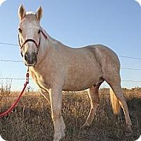 Adopt A Pet :: Hooter - Farmersville, TX