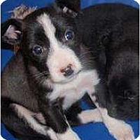 Adopt A Pet :: spuds and Buds - CHESTERFIELD, MI
