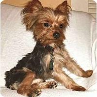 Adopt A Pet :: Joel - Mooy, AL