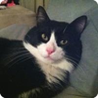 Adopt A Pet :: Pal - Vancouver, BC