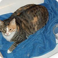 Adopt A Pet :: Bella - Pensacola, FL