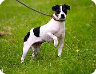 Feist Mix Dog for adoption in McKenzie, Tennessee - RILEY
