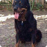 Adopt A Pet :: Carmen - Ocean Ridge, FL