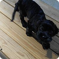 Adopt A Pet :: Benji/Fred  -Adopted! - Kannapolis, NC