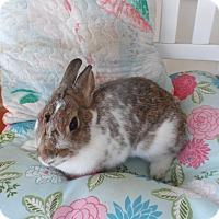 Adopt A Pet :: Skye - Hillside, NJ