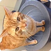 Adopt A Pet :: Claude - Sewaren, NJ