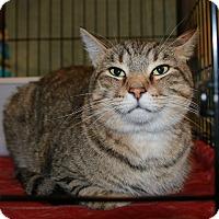 Adopt A Pet :: Frank - Rochester, MN