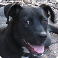 Adopt A Pet :: Slim! - St Petersburg, FL