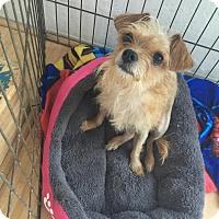 Adopt A Pet :: Juju - San Francisco, CA
