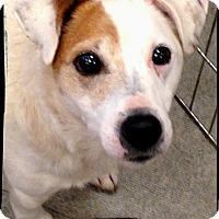 Adopt A Pet :: Otto - Johnson City, TX
