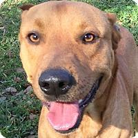 Adopt A Pet :: Declan - St Petersburg, FL