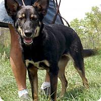 Adopt A Pet :: Kiera - Citrus Springs, FL