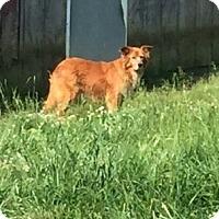 Golden Retriever Mix Dog for adoption in Powder Springs, Georgia - Mama Mia