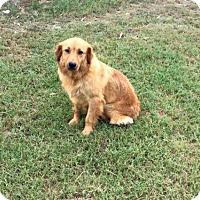 Adopt A Pet :: Minnie - Longview, TX