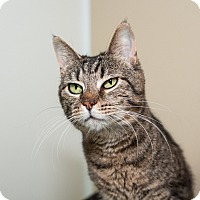 Adopt A Pet :: Fergie - Seville, OH