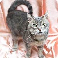 Adopt A Pet :: Rhiannon - Chattanooga, TN