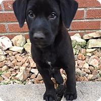 Adopt A Pet :: Jack - Bedminster, NJ