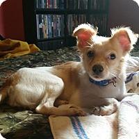 Adopt A Pet :: Churro - Loveland, OH