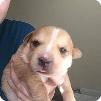 Adopt A Pet :: Nala - wolfeboro, NH