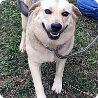 Adopt A Pet :: Sadie - Loogootee, IN