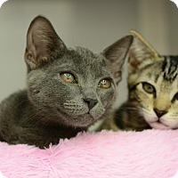 Adopt A Pet :: Nikkita - West Palm Beach, FL