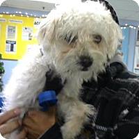 Adopt A Pet :: Fluffy - Philadelphia, PA