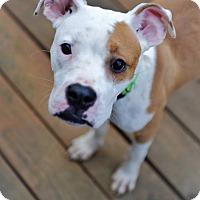 Adopt A Pet :: Gigi - Durham, NC