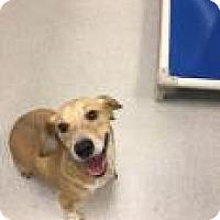 Adopt A Pet :: Buddy 2898 - Columbus, GA