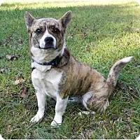 Adopt A Pet :: Gretel - Mocksville, NC