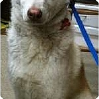 Adopt A Pet :: Grizz - Wasilla, AK